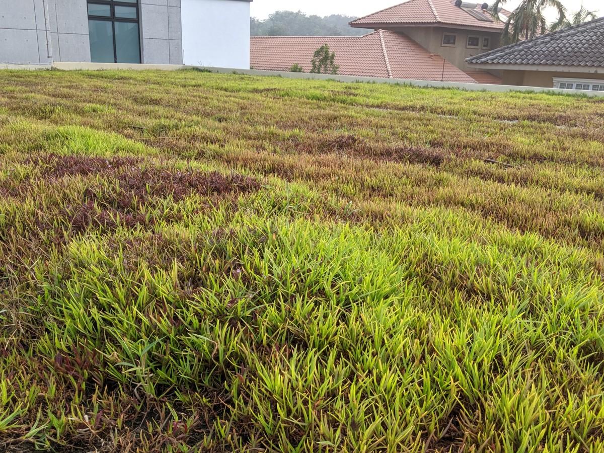Belalang Gaiamat Green Roof